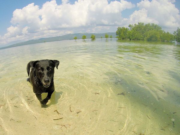 dog swimming in the sea Animal Themes Animals In The Wild Beauty In Nature Dogs Domestic Animals Outdoor Photography Pet Photography  Pets Sea And Sky Live For The Story Sommergefühle