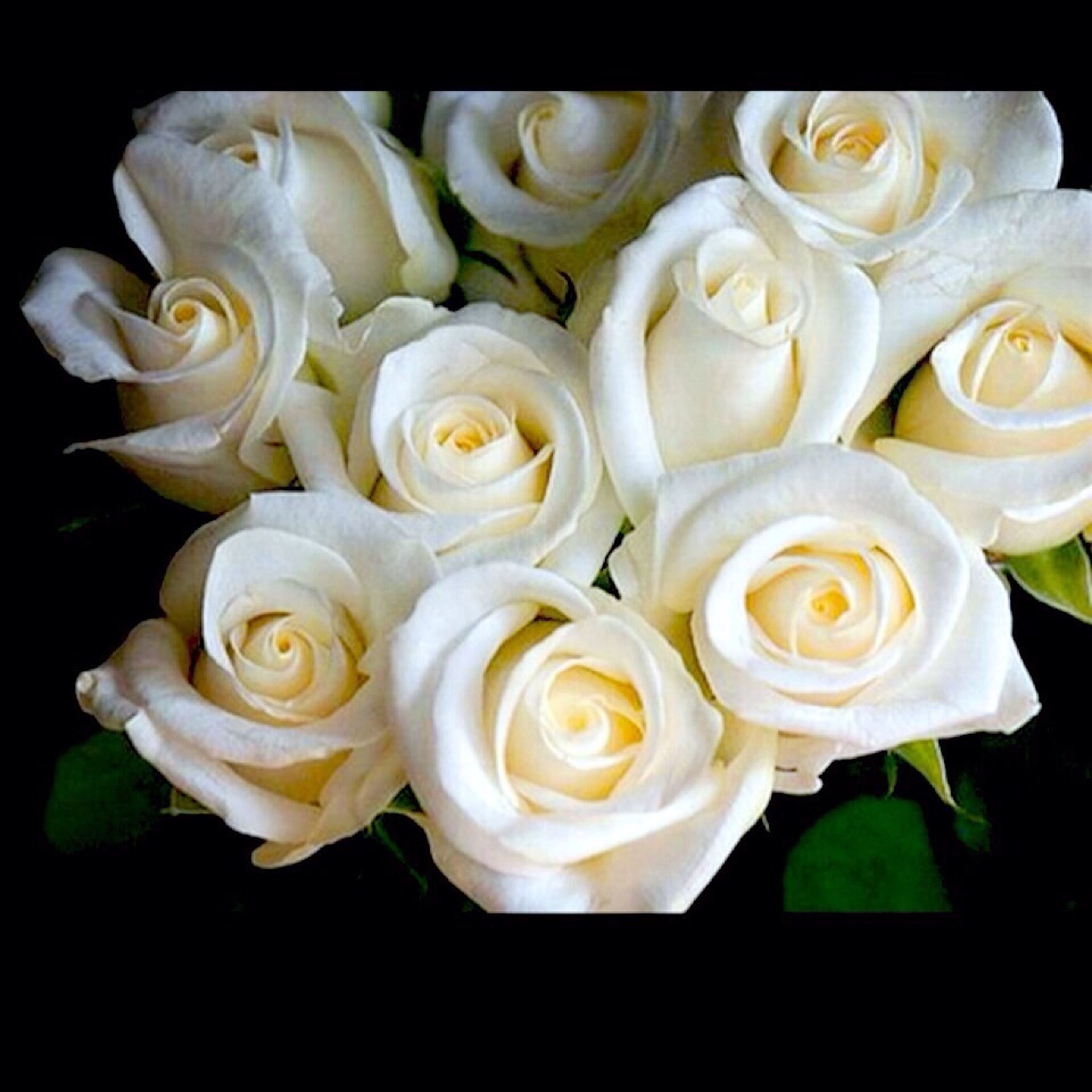flower, freshness, petal, fragility, flower head, rose - flower, beauty in nature, rose, white color, close-up, growth, nature, indoors, bunch of flowers, high angle view, blossom, blooming, studio shot, bouquet, no people