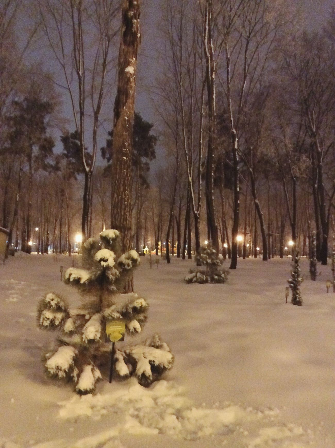 Winter Tree Winter Trees Snow Trees Beauty In Nature Wintertime Winter Wonderland Winterscapes Winter_collection