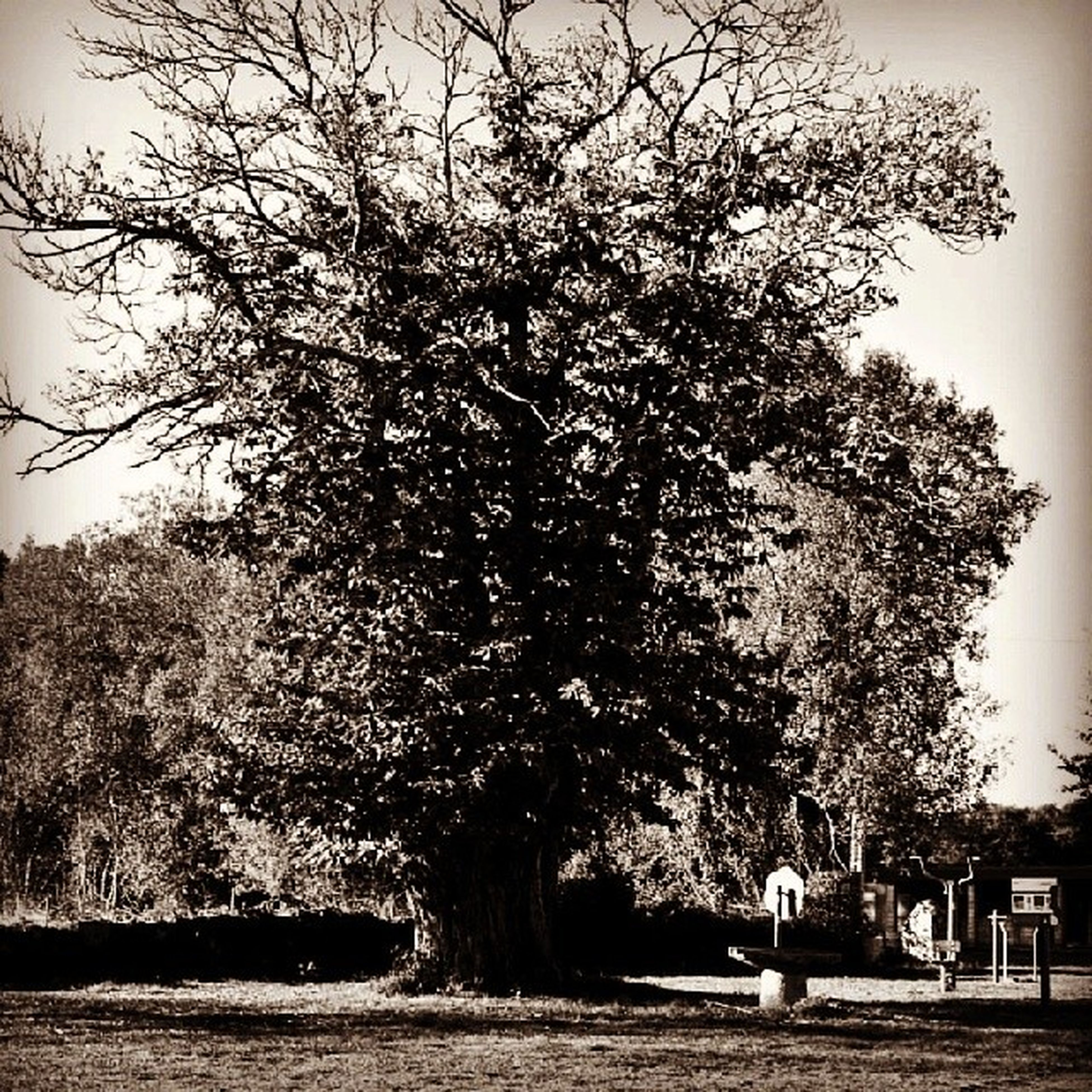 tree, bare tree, branch, sky, tree trunk, park - man made space, nature, bench, tranquility, growth, day, clear sky, tranquil scene, outdoors, park, transportation, built structure, full length, building exterior