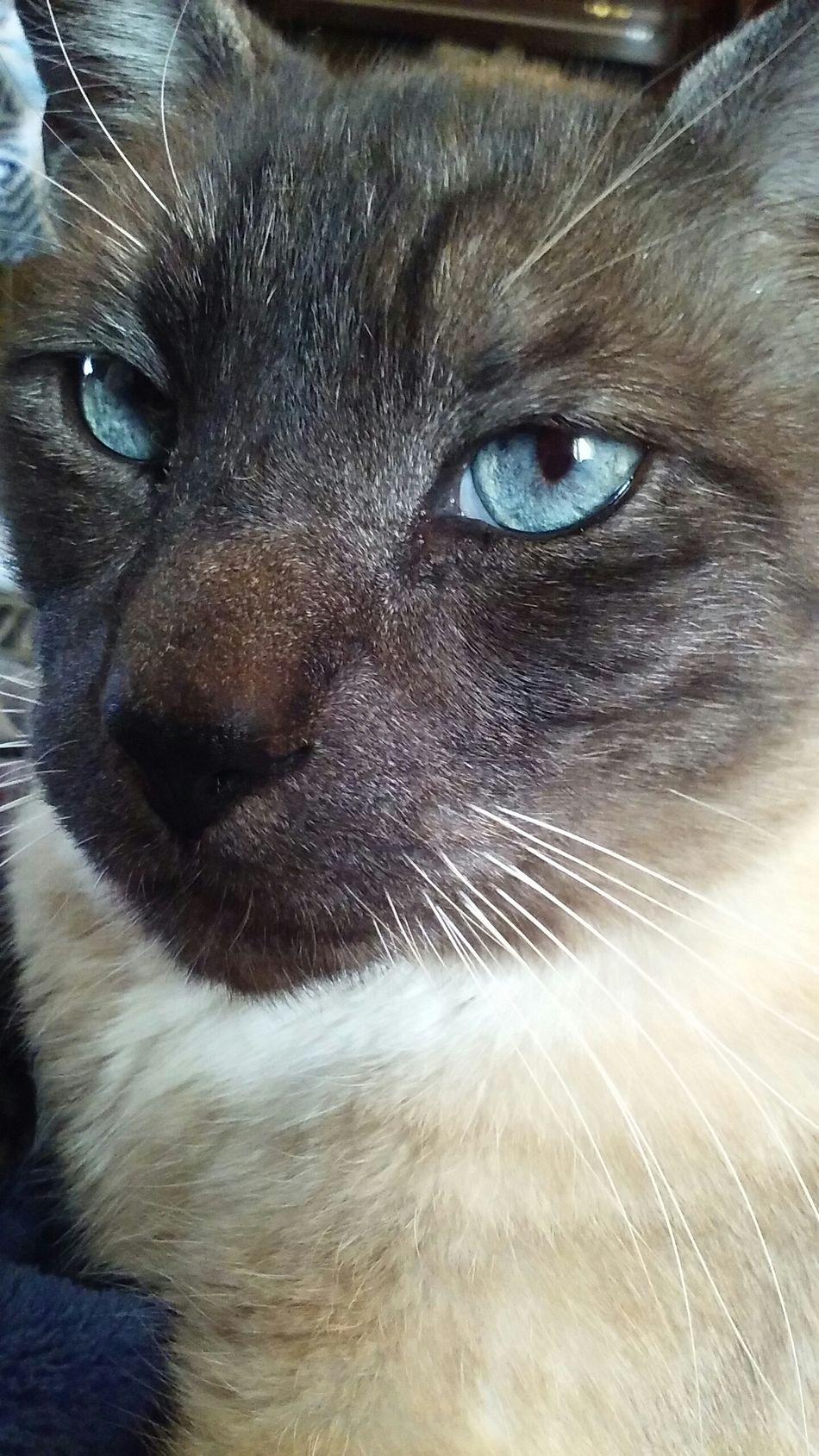 His eyes are beautiful(: Suki Blue Eyes Gorgeous