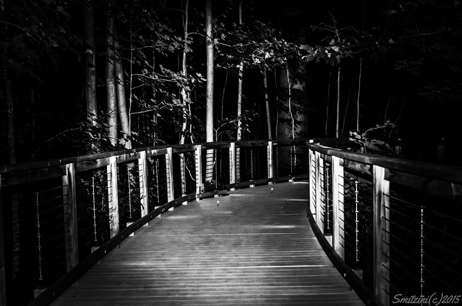 Traveling through to a Vanishing Point On The Path The Vanishing Point Taking Photos Bnw_photography Black&white Black And White Photography Black & White Blackandwhite Walking Around A Walk In The Woods Eye4photography  From My Point Of View Streamzoofamily Ladyphotographerofthemonth For My Friends That Connect Modern Architecture Architecture_bw