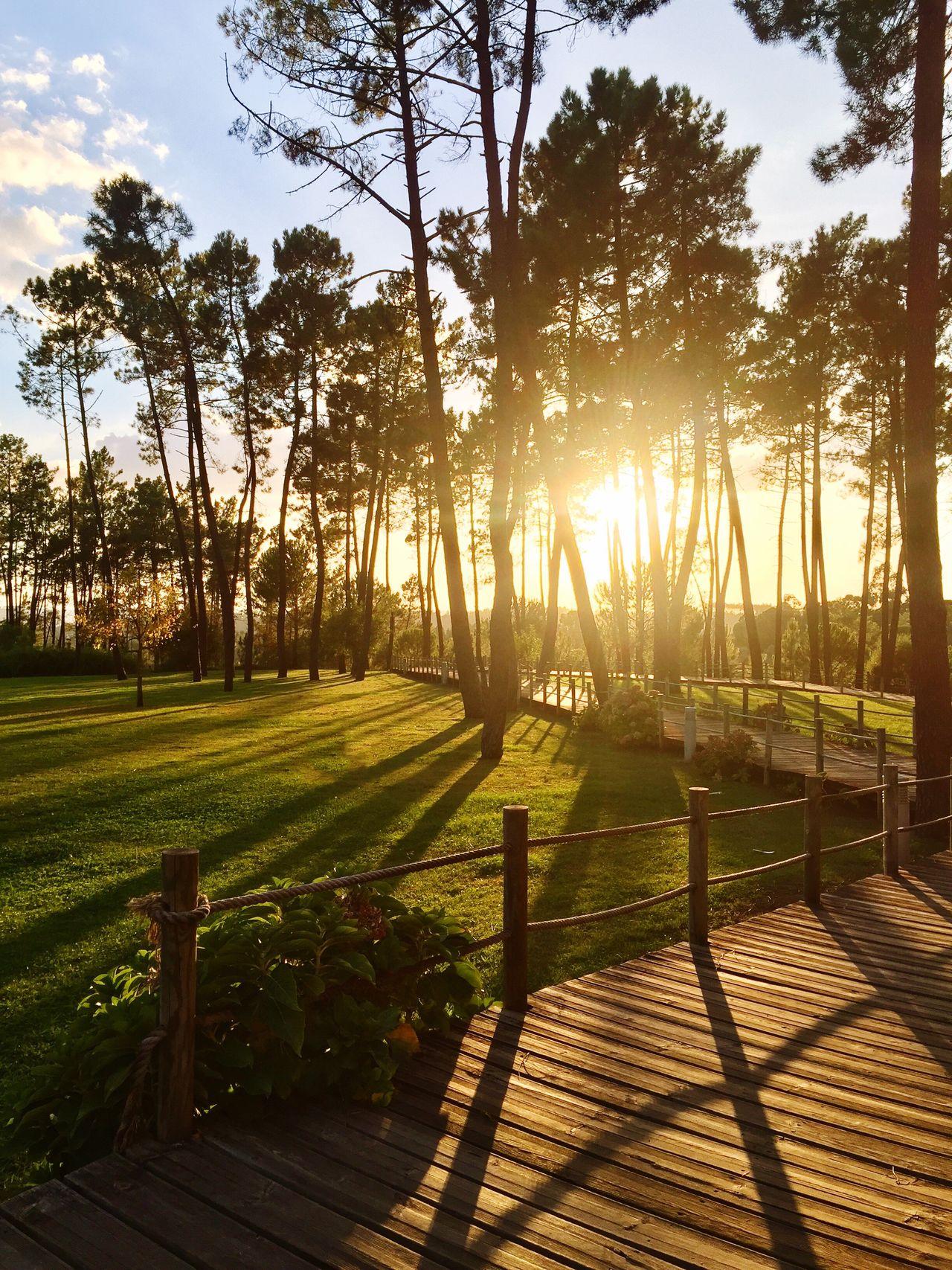 Fim de tarde São Lourenço, Abrantes. Sunlight Sunset Outdoors Park Abrantes Nature Tree