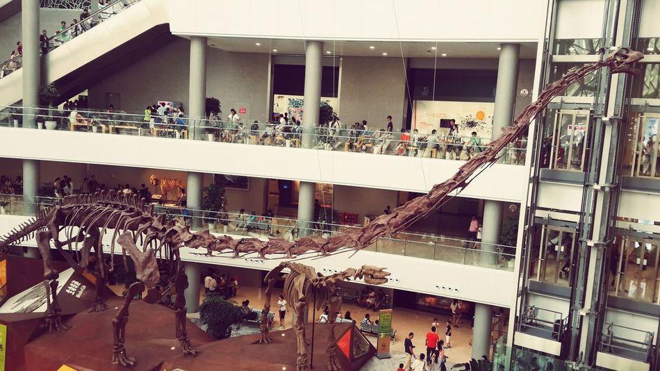 My Life Details Of My Life Enjoying Life Taking Photos Hello World Shanghai Natural History Museum Shanghai