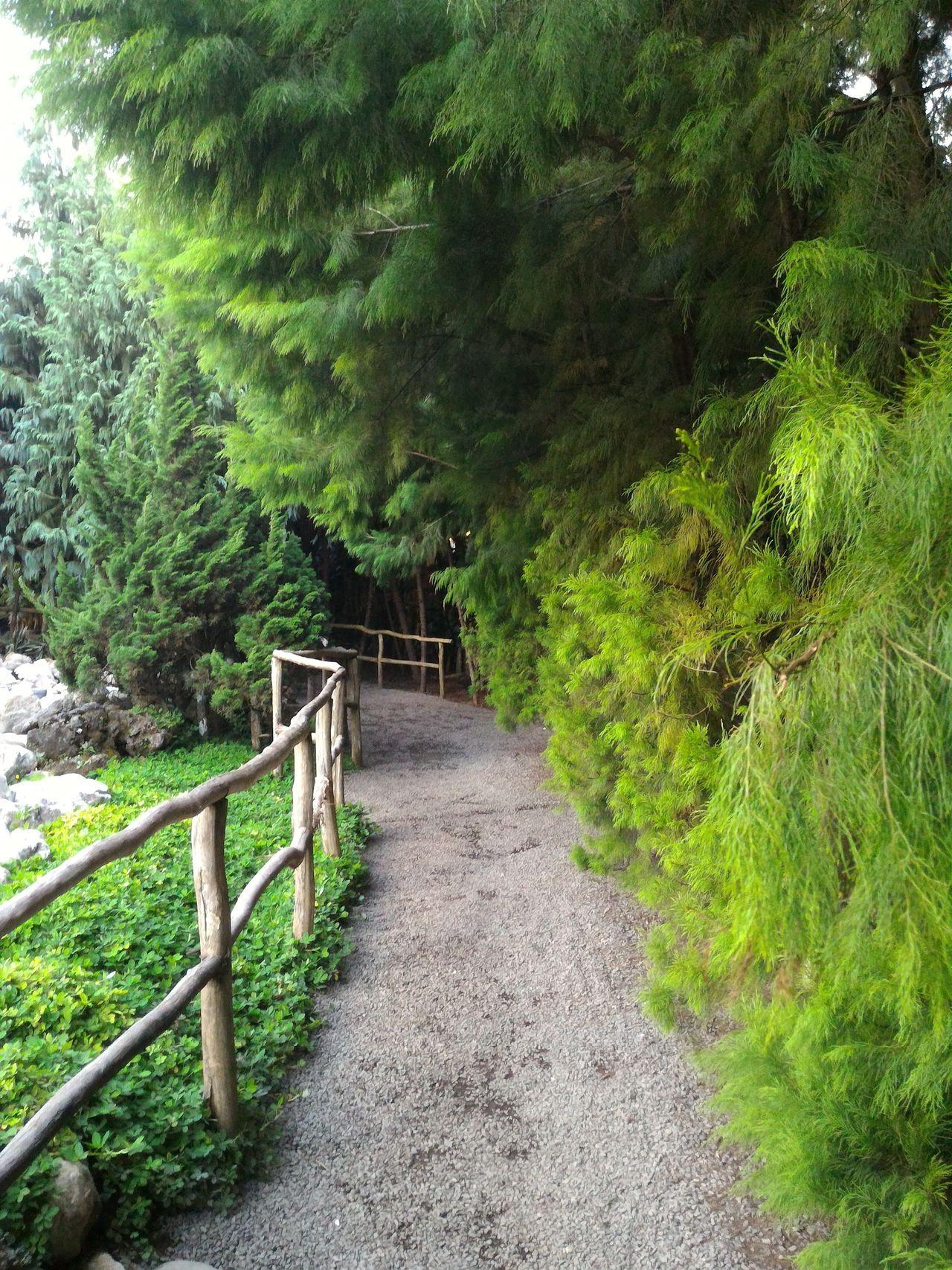 Garden Tree Stone Road Vacation Bridge