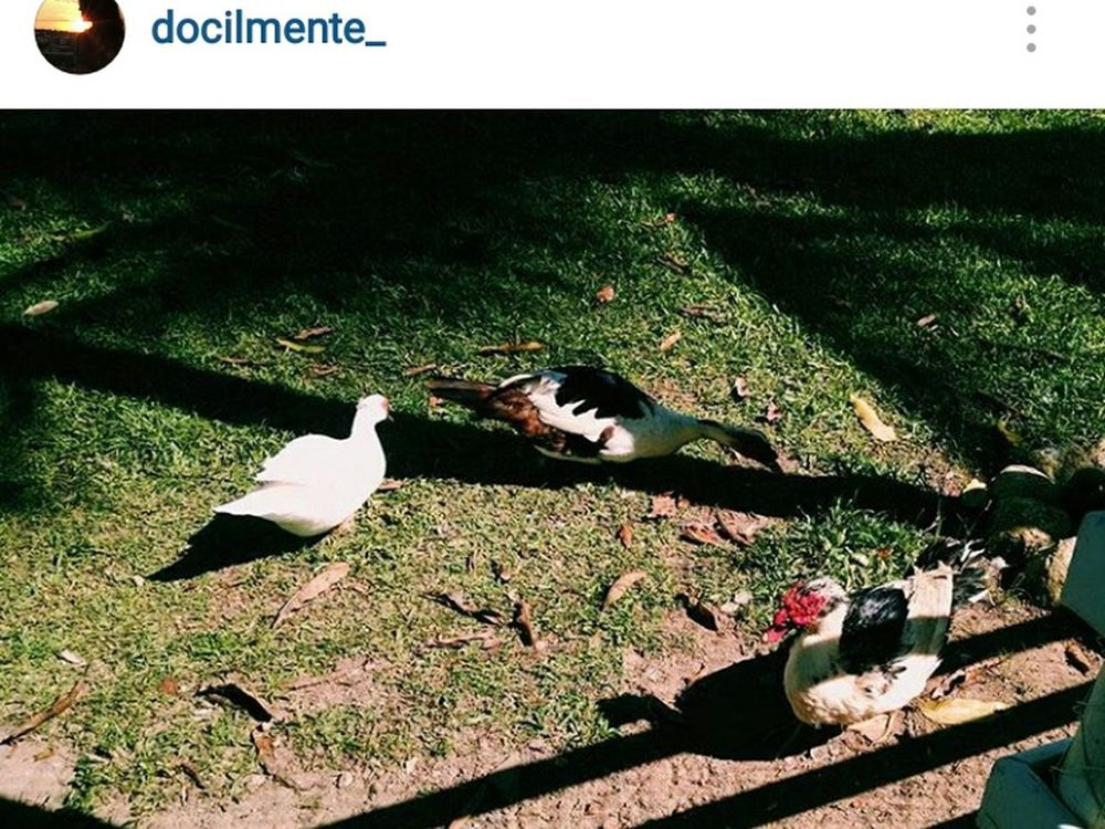 Instagram 😊 Picture Ducks Relaxing Nature Enjoying Life Landscape Photography Cute Ducks Check This Out