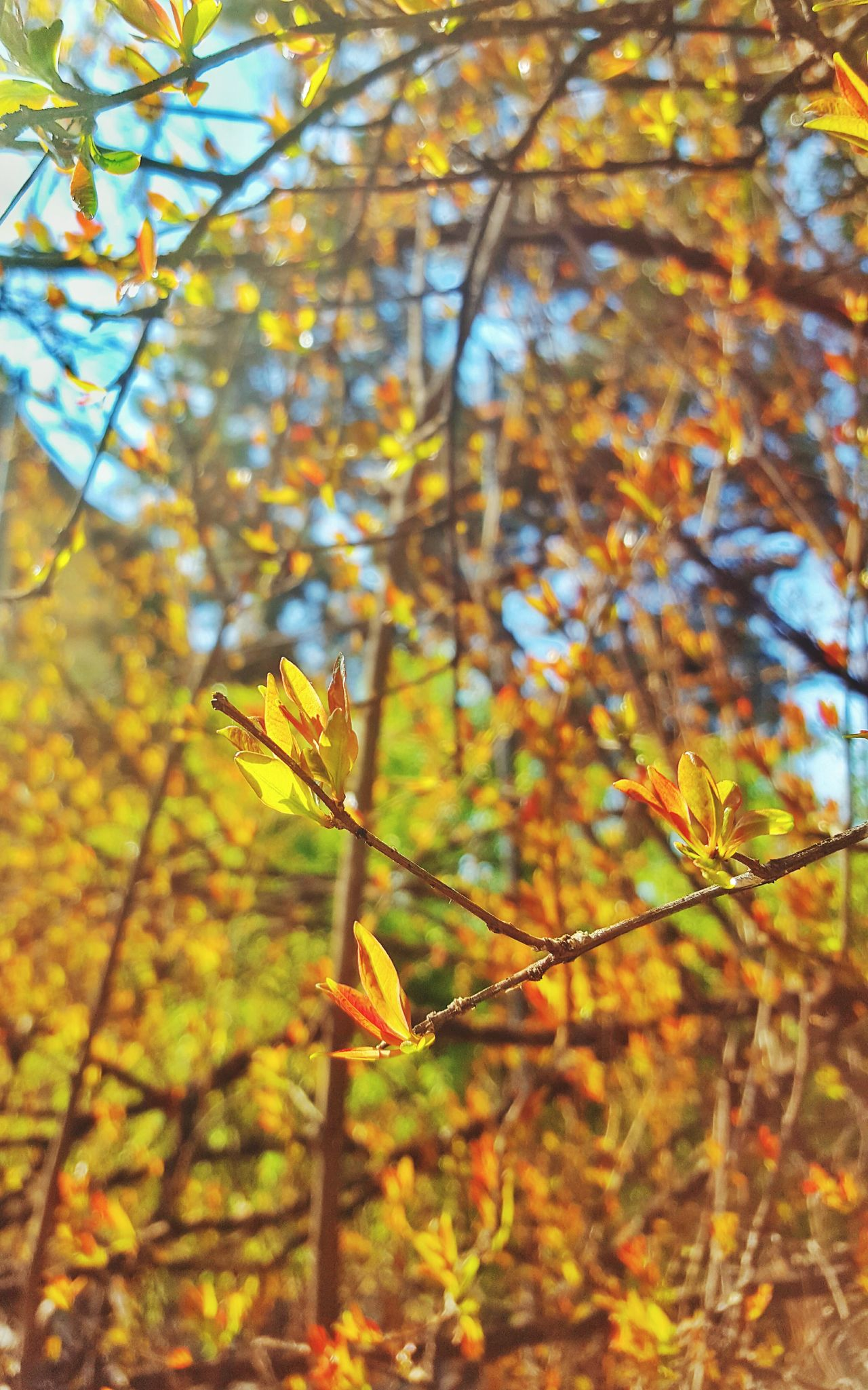 Spring flowers Nature Branch Beauty In Nature Focus On Foreground Close-up No People Growth Change Day Sunlight Plant Outdoors Leaf Autumn Fragility Tree Animal Themes Freshness Natural Peaceful Nature_collection Scenics Tranquility Beautiful Outdoor Photography