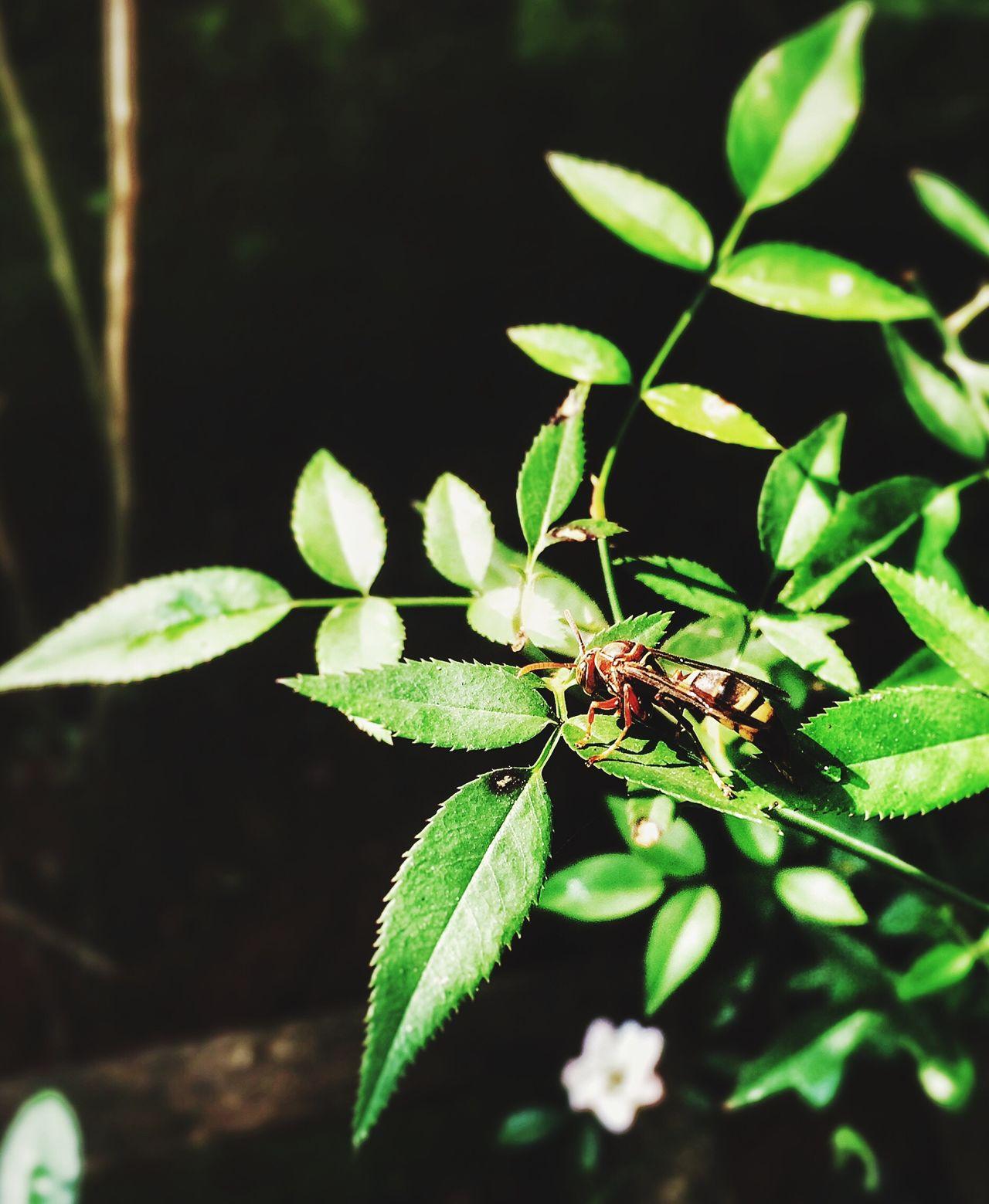 A Click from my garden. Naturelover BashPhotography