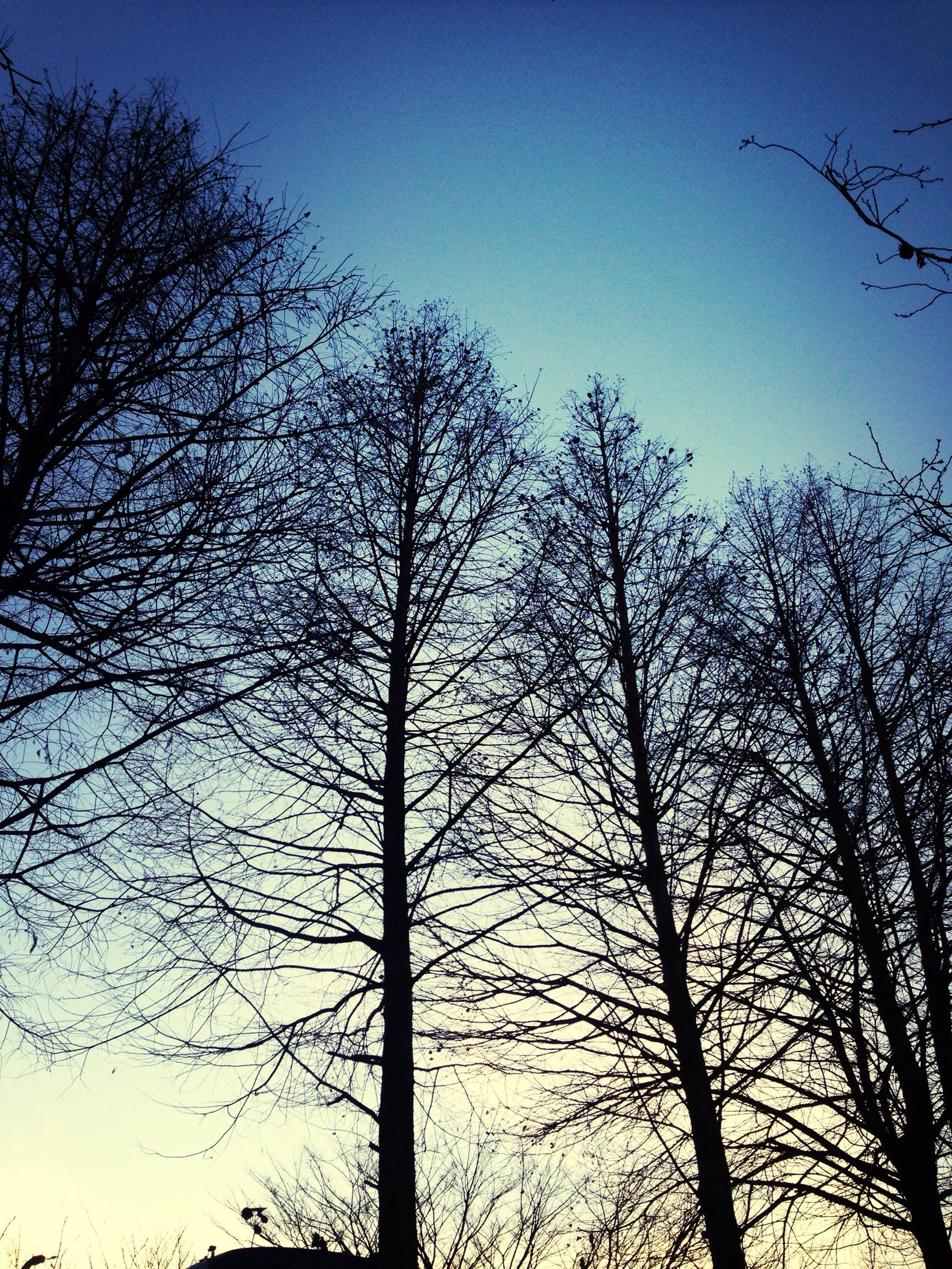 tree, bare tree, low angle view, silhouette, clear sky, branch, tranquility, nature, beauty in nature, blue, tranquil scene, scenics, tree trunk, sky, sunset, dusk, outdoors, no people, growth, idyllic