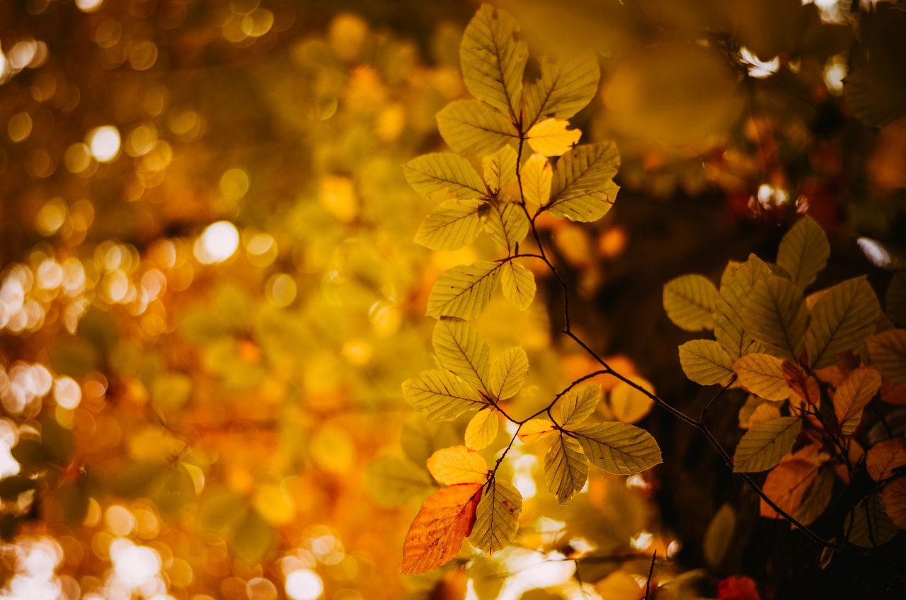 Autumn Autumn Colors Autumn Leaves EyeEm Nature Lover EyeEm Selects Nature Nikon Poland The Week On EyeEm Autumn🍁🍁🍁 Beauty In Nature Freshness Growth Kaszuby Kaszuby Eyeem Leaf Nature Nature_collection No People Outdoors Park Plant Poland Eyeem Tree Yellow