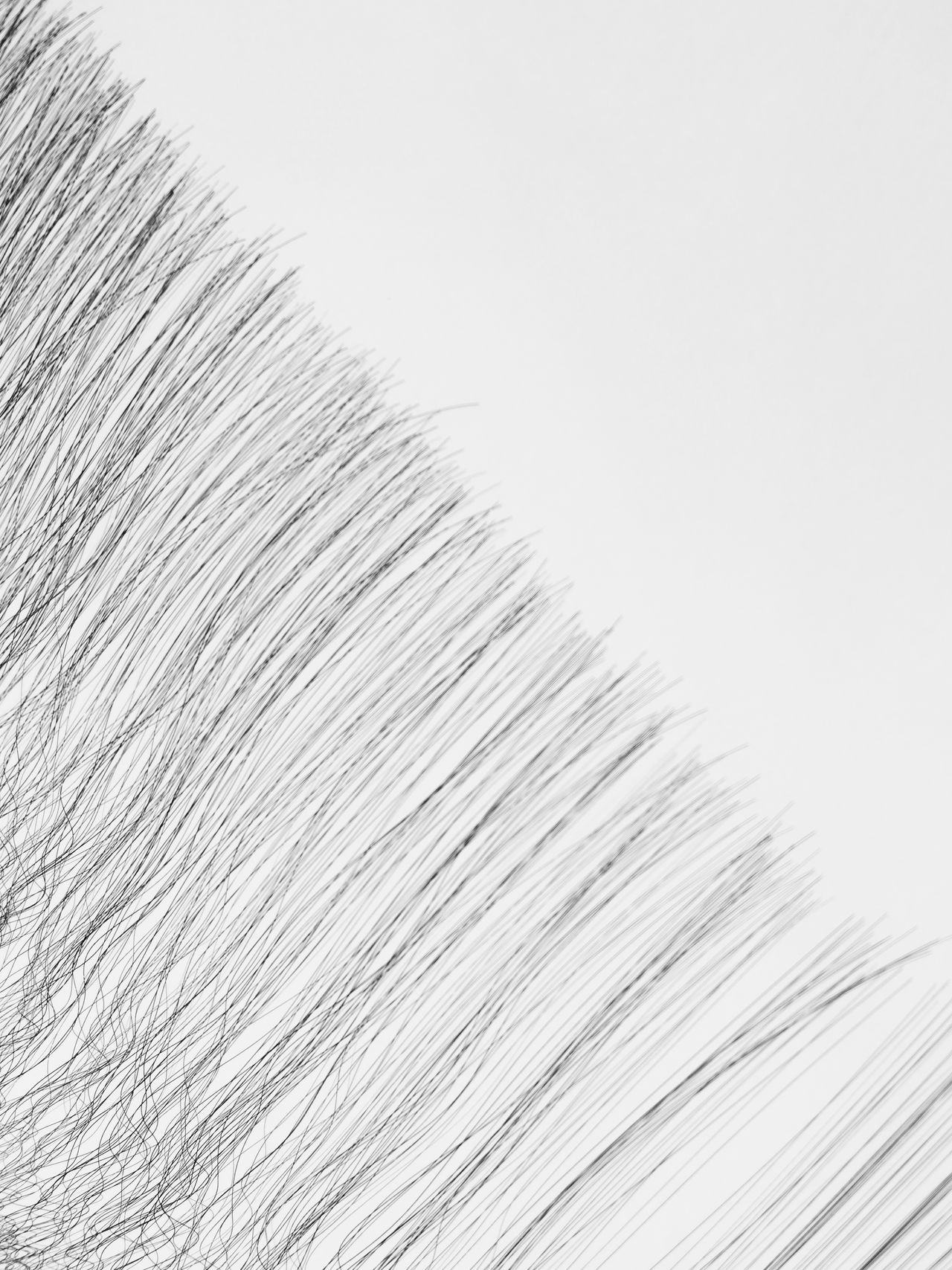 Beautiful stock photos of grafiken, Abstract, Close-Up, High Angle View, Human Hair