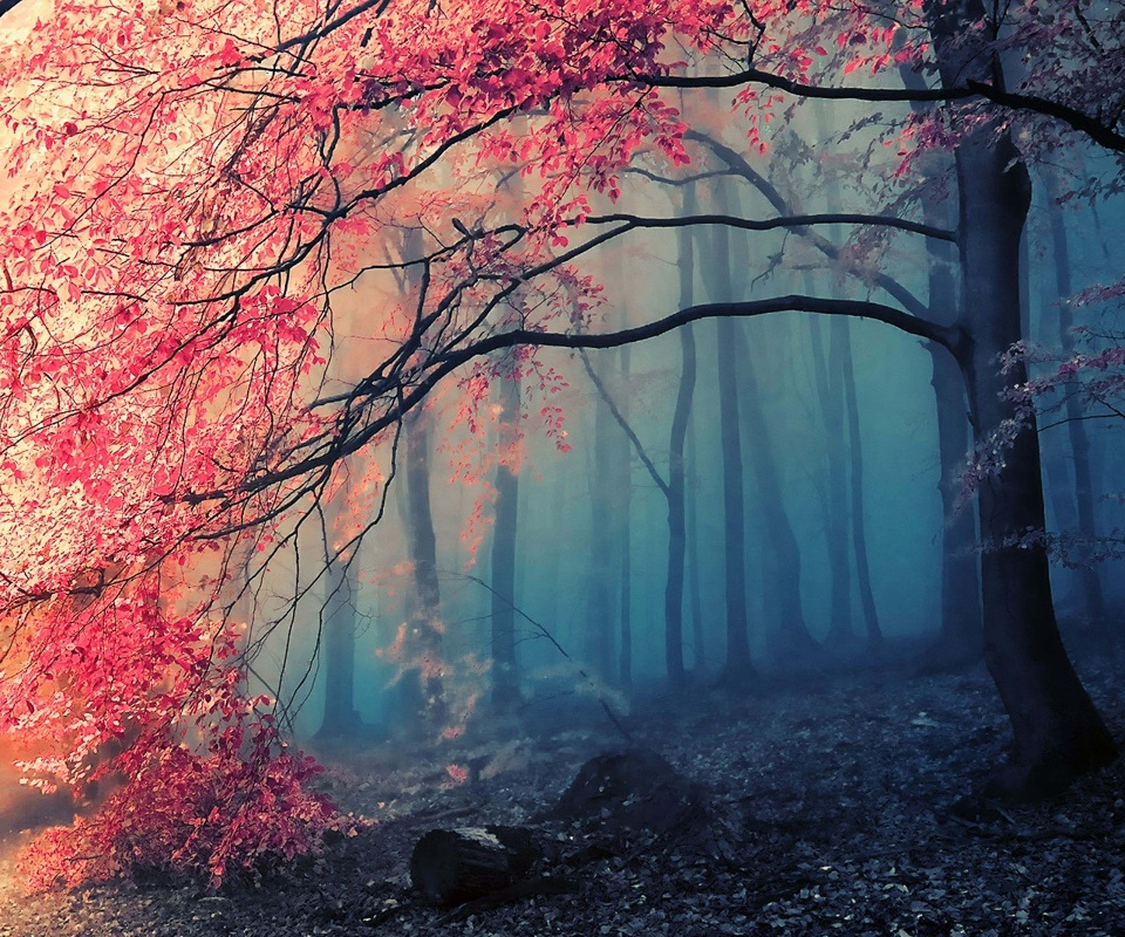 tree, branch, beauty in nature, nature, growth, tranquility, tree trunk, season, tranquil scene, scenics, flower, autumn, change, pink color, outdoors, day, sunlight, no people, park - man made space, idyllic