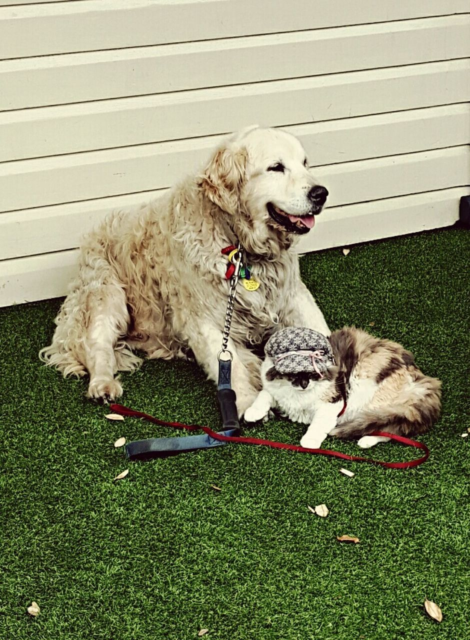 dog, pets, domestic animals, grass, animal themes, mammal, one animal, sitting, lying down, outdoors, day, no people