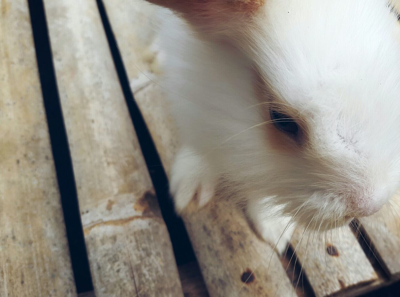Alice in Wonderland EyeEm Animal Lover Rabbit Perspective