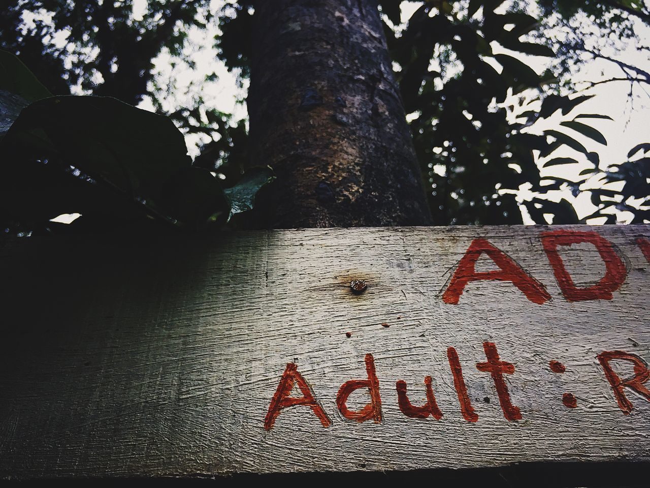 Adult only. Text Tree Communication Tree Trunk Nature Close-up Adult Signboard Adults Only Toll Plank
