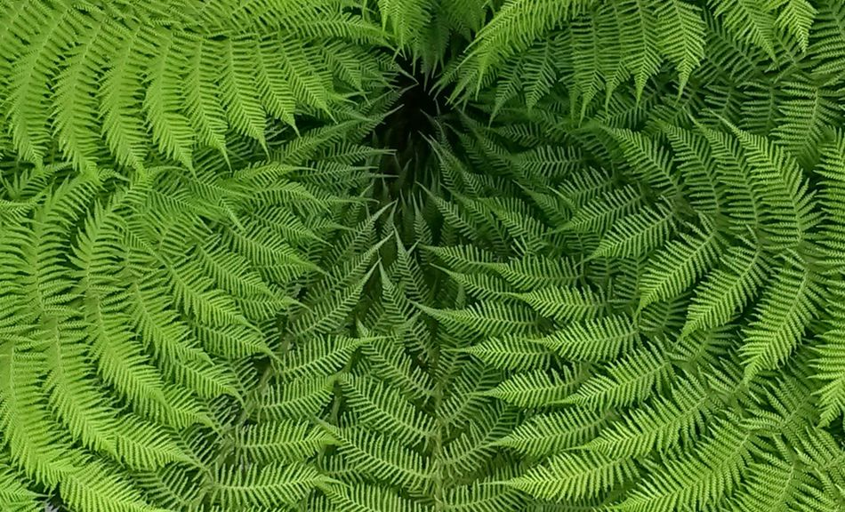 Beautiful stock photos of colors, Achievement, Beauty, Bracken, Circular