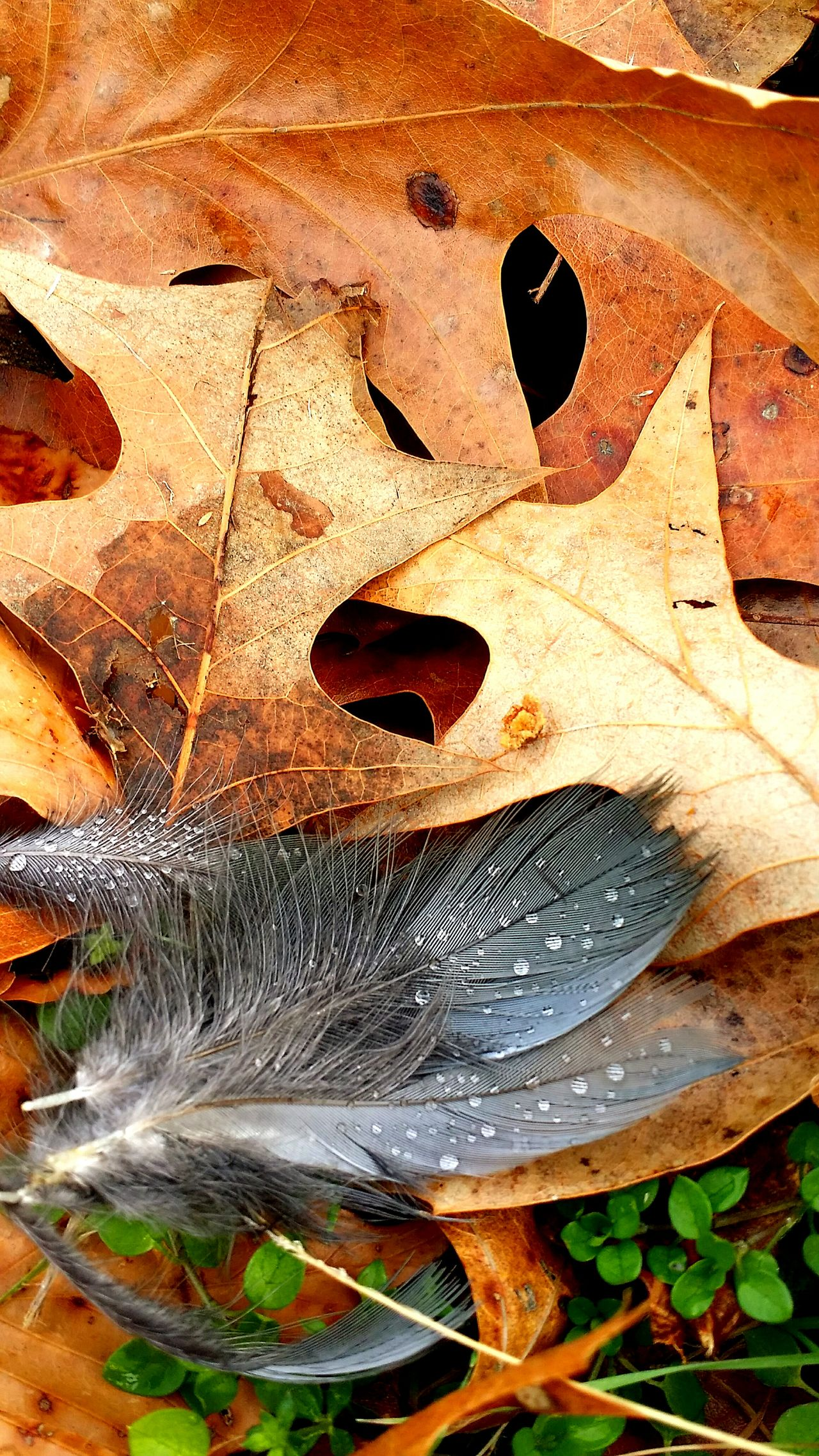 Bald Eagle Feathers Growth Discarded Close-up Water Droplets Leafs Photography