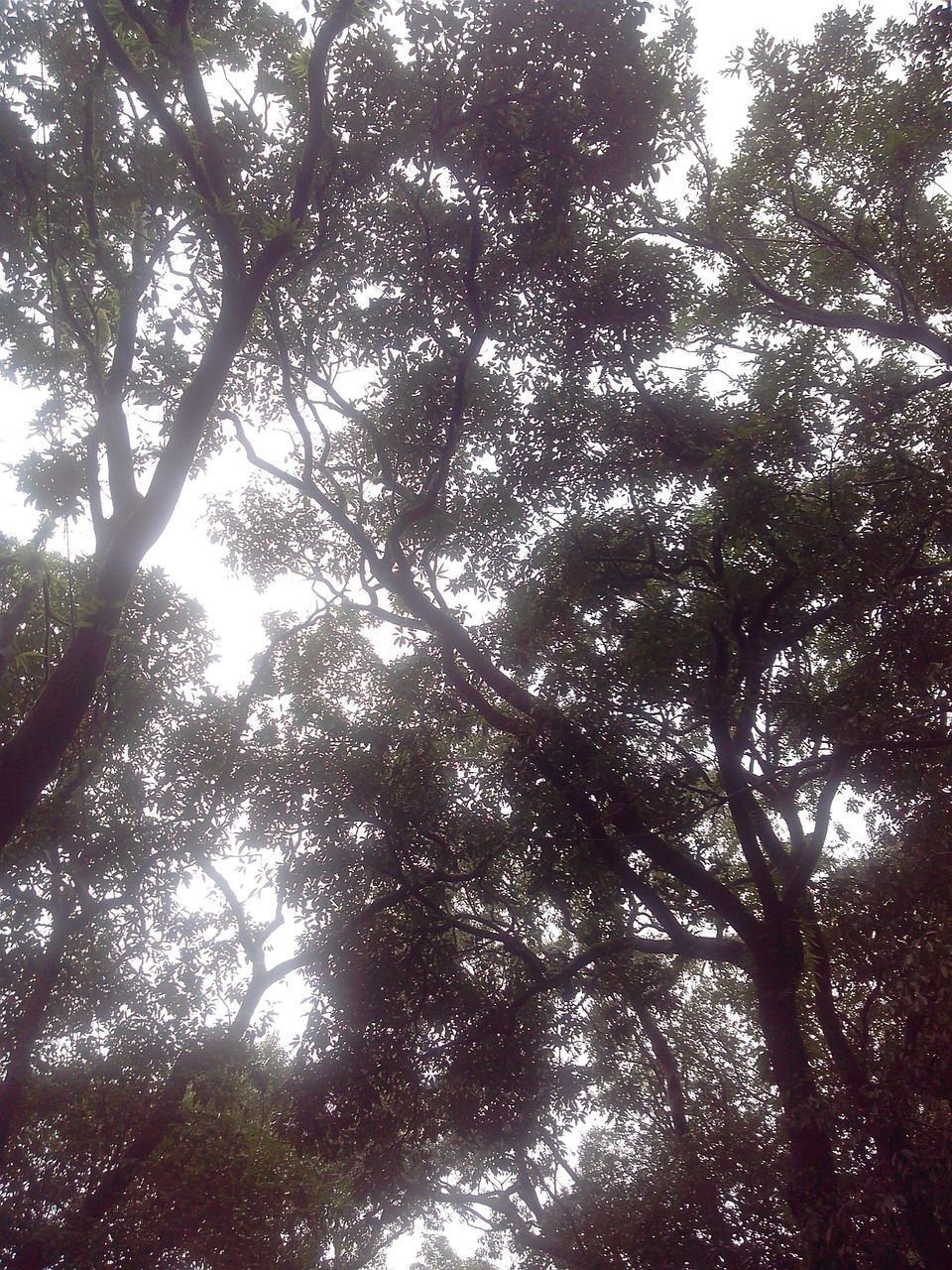 tree, low angle view, nature, branch, growth, beauty in nature, day, tranquility, outdoors, forest, no people, tranquil scene, scenics, backgrounds, tree trunk, sky