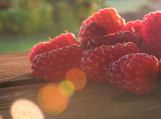Sweetness from our garden 😍 Raspberries Lamponi  Macro Photography Garden Photography Taking Photos Eyeforphotography EyeEm Nature Lover