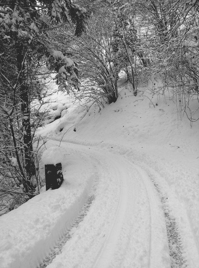 Snow ❄ Road