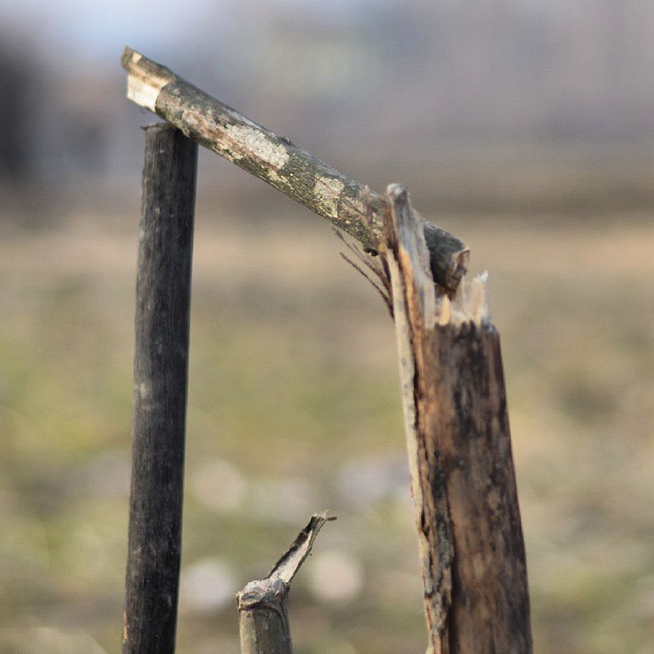 Stumps Cricket Field Game Bails Play Bandipur Kashmir IExploreKashmir IAmKashmir Iphotograph Revoshotsphotography Revo Revoshots IExplore Itravel Italk Ishoot Freedom