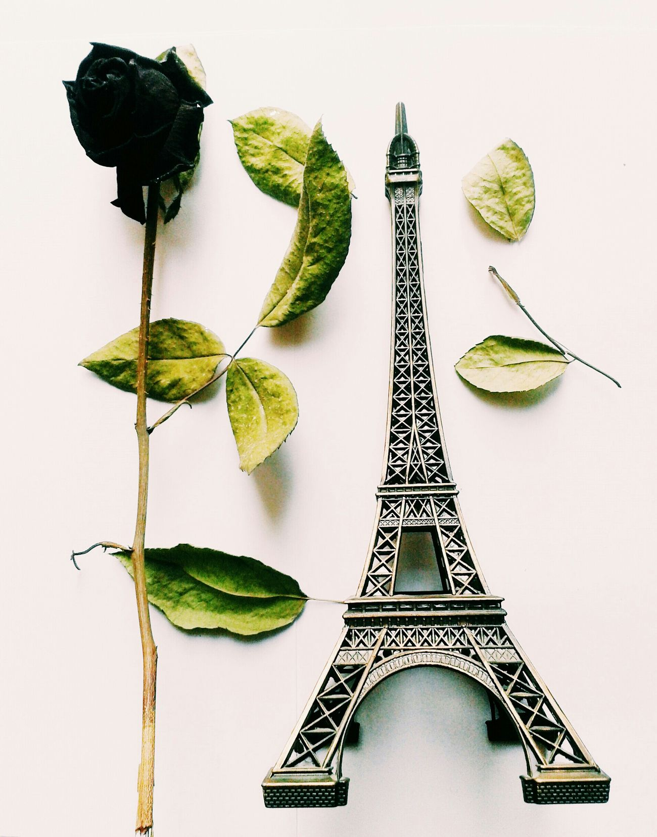 Rose Parisienne Eiffel Tower Love Romance