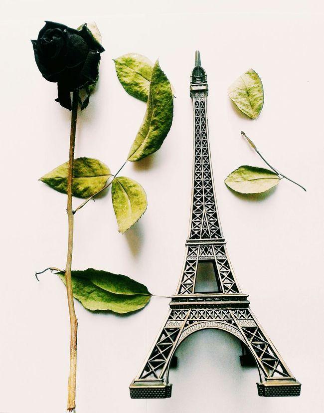 Rose Parisienne Eiffel Tower Love Romance