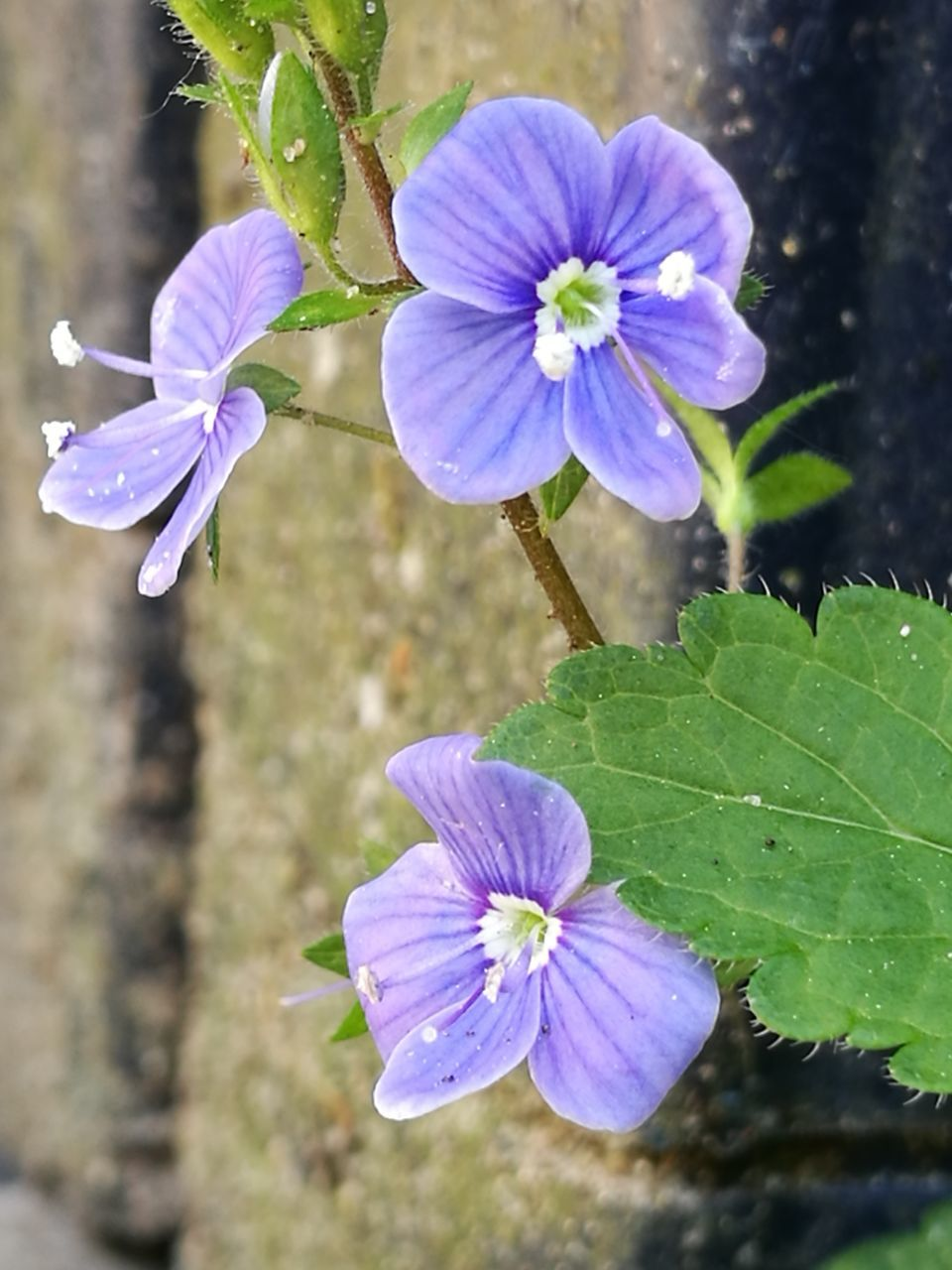 flower, growth, nature, plant, beauty in nature, purple, blooming, petal, fragility, freshness, no people, close-up, outdoors, flower head, day