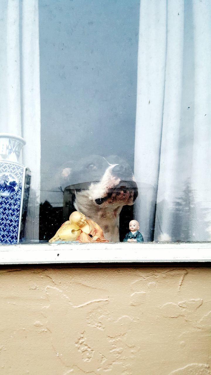 Pit Bull Terrier And Figurines Seen Through Glass Window