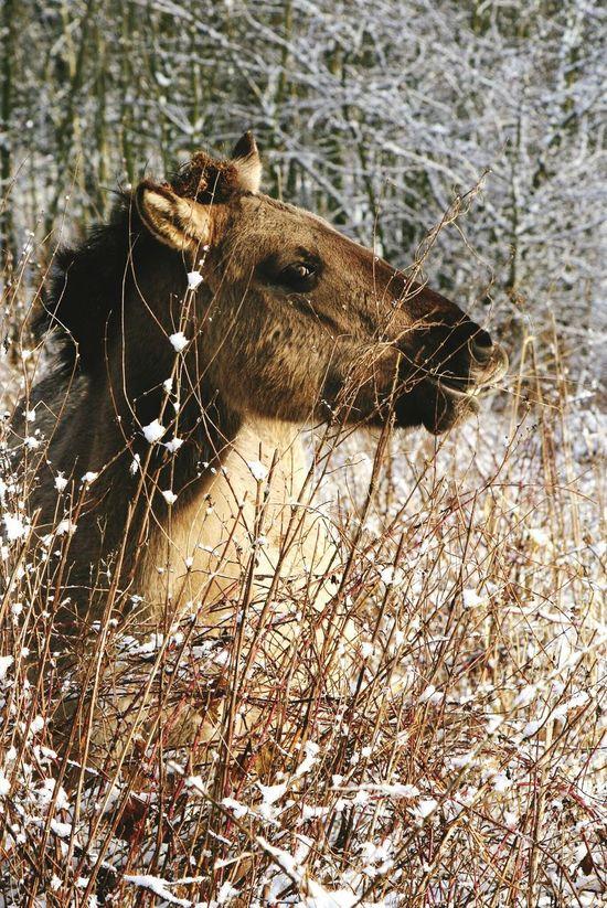Nature Horse Winter Blauwekamer Wageningen Dutch Landscape Natuur Molfotografie Netherlands
