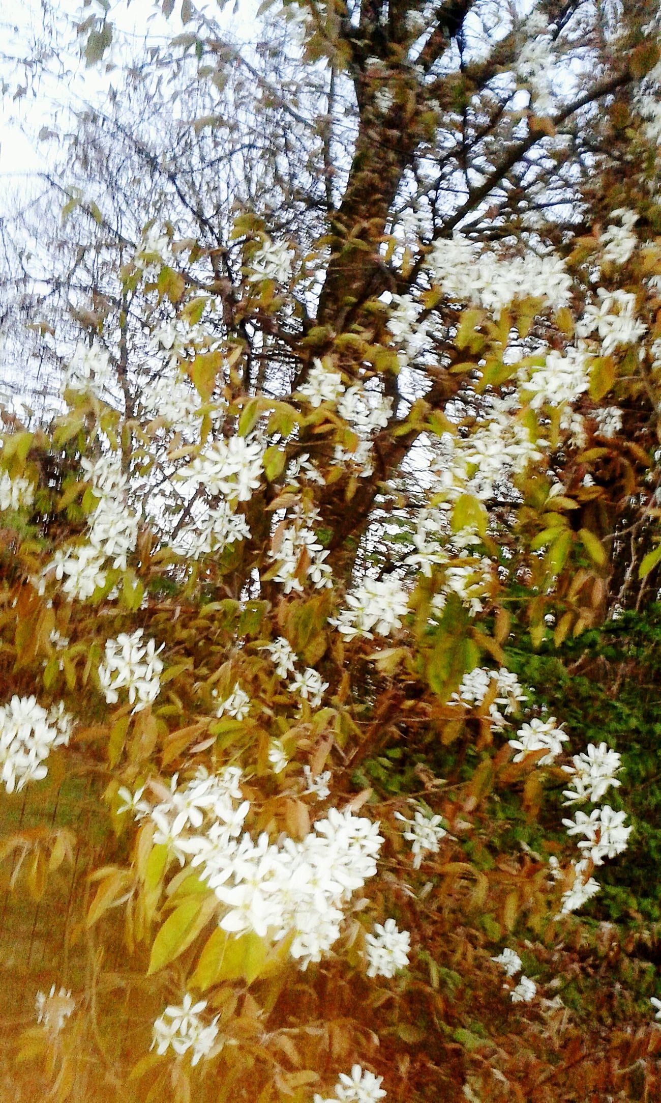 First Eyeem Photo Flower White&green