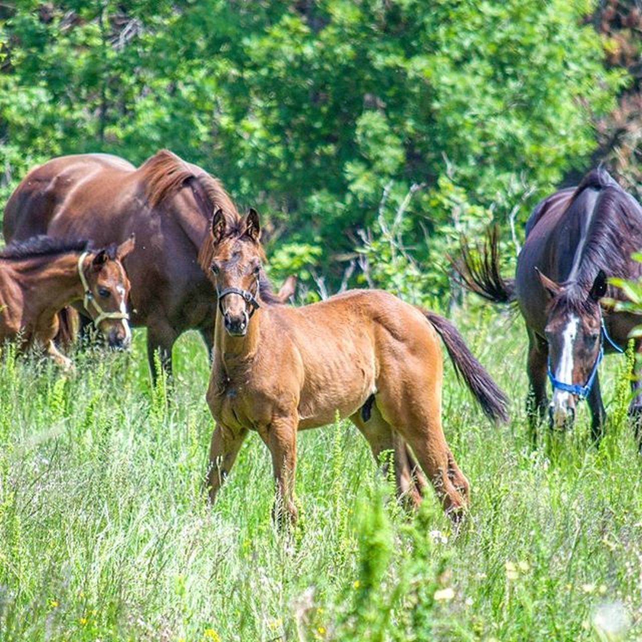 🐴Horse Racehorse Stable Equine Forest Tree Trees Tagsforlikes Baby Equestrian Black Green Run Landscape Nature Animal Animals Horses Gopro Beauty Throughbred World Boys Photooftheday Adorable animalstagsforlikeshandsomerich
