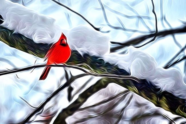 For The Love Of Birds EyeEm Nature Lover
