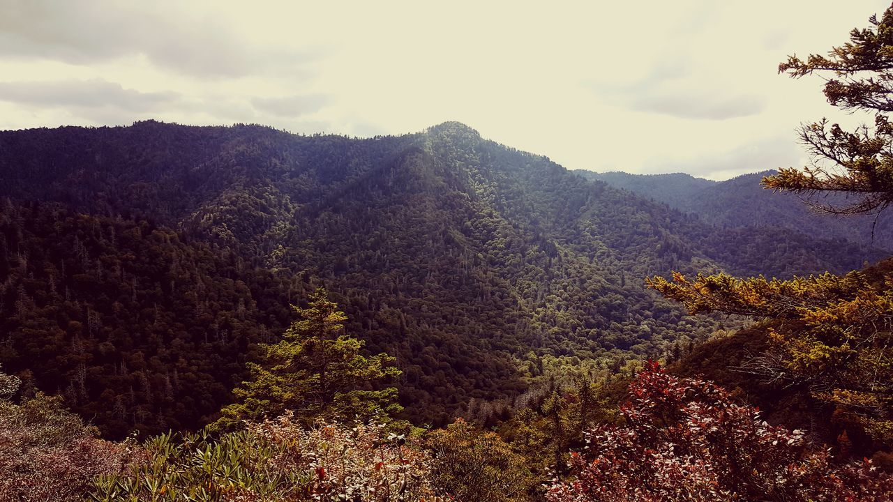 mountain, nature, beauty in nature, tree, tranquility, tranquil scene, scenics, landscape, mountain range, no people, outdoors, day, forest, sky