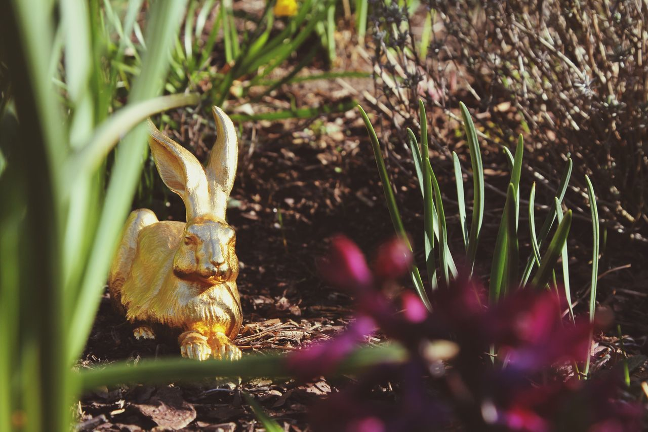 animal representation, easter, celebration, no people, animal themes, tradition, plant, one animal, statue, growth, nature, grass, outdoors, flower, day, close-up, bird