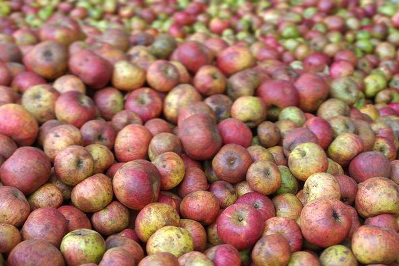 Manzanas el sueño o pesadilla de Blancanieves y la Madrastra . Algo tendrá que decir también Eva y Adan