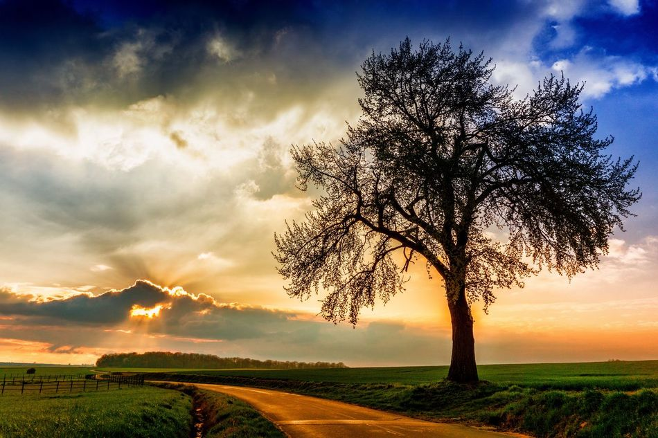 Bon week-end entre ciel et nuages... Serenity In Nature Serenity Nature_collection Countryside Tree And Sky Tree_collection  Tree Sunset Colorful Colors Serenity Travel Destinations Eyeem Photography Serene Outdoors Eye4photography  Tranquil Scene Long Goodbye EyeEmNewHere
