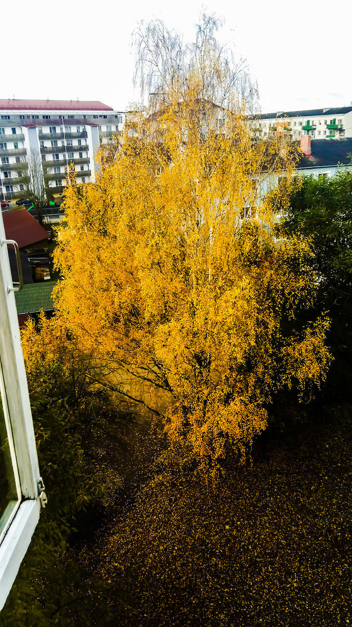 autumn, architecture, change, tree, no people, built structure, building exterior, outdoors, yellow, day, nature, city, sky