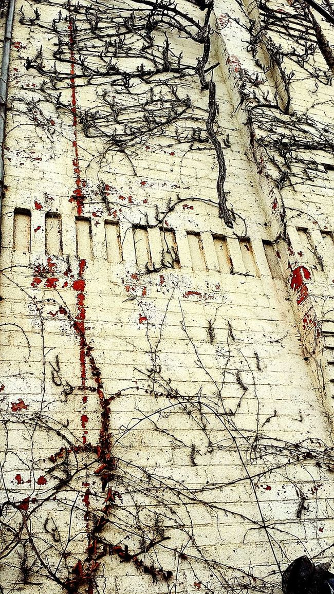 Vines On Walls Climbing Stuff Architectural Feature Old Building Exterior Urbex Home Exterior Beauty Of Decay Details Of Nature Textures And Surfaces