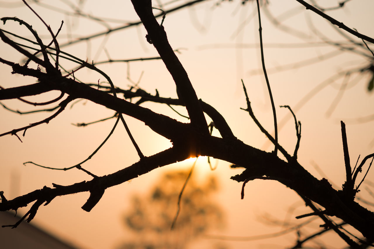 tree, branch, silhouette, nature, sunset, no people, outdoors, beauty in nature, focus on foreground, low angle view, bare tree, close-up, day, sky