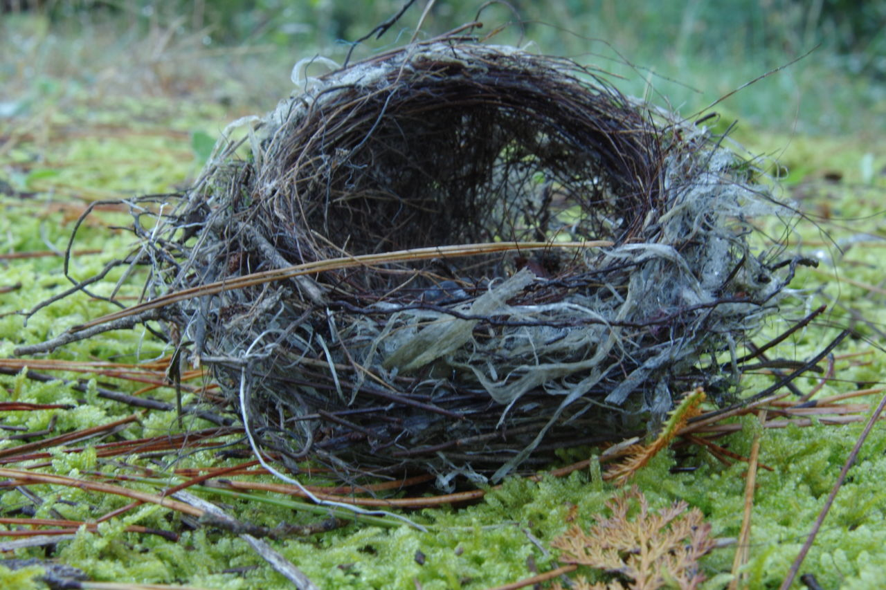 Nest Bird Nest Close-up Animal Themes Nature Outdoors Field No People Animals In The Wild Autumn Colours EyeEm Nature Lover Pentax K-3 Japan Photography Pentax Beauty Moss-covered Forest Rainy Weather Autumn Nature Beauty In Nature