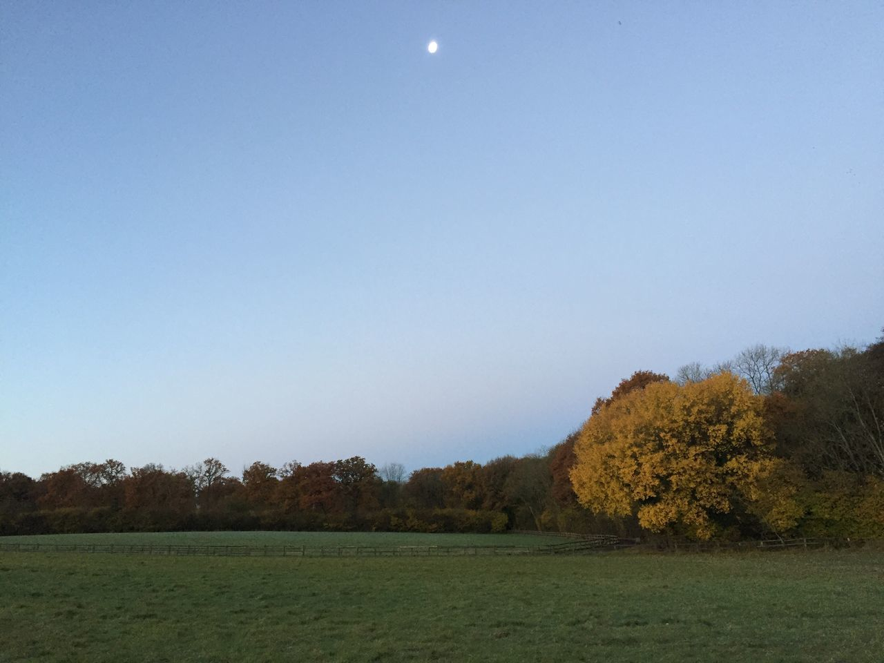 nature, tree, landscape, beauty in nature, clear sky, field, tranquility, copy space, tranquil scene, scenics, no people, outdoors, moon, day, sky, grass