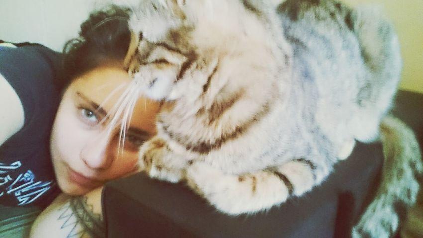 Kitty Kittycat Cat Mycat