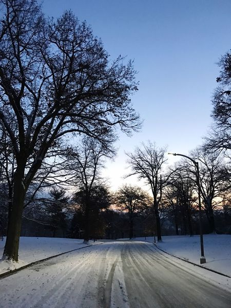 Tree Winter Cold Temperature Snow Road Nature Bare Tree The Way Forward Beauty In Nature Tranquility Scenics Sky Tranquil Scene Transportation No People Outdoors Branch Growth Day