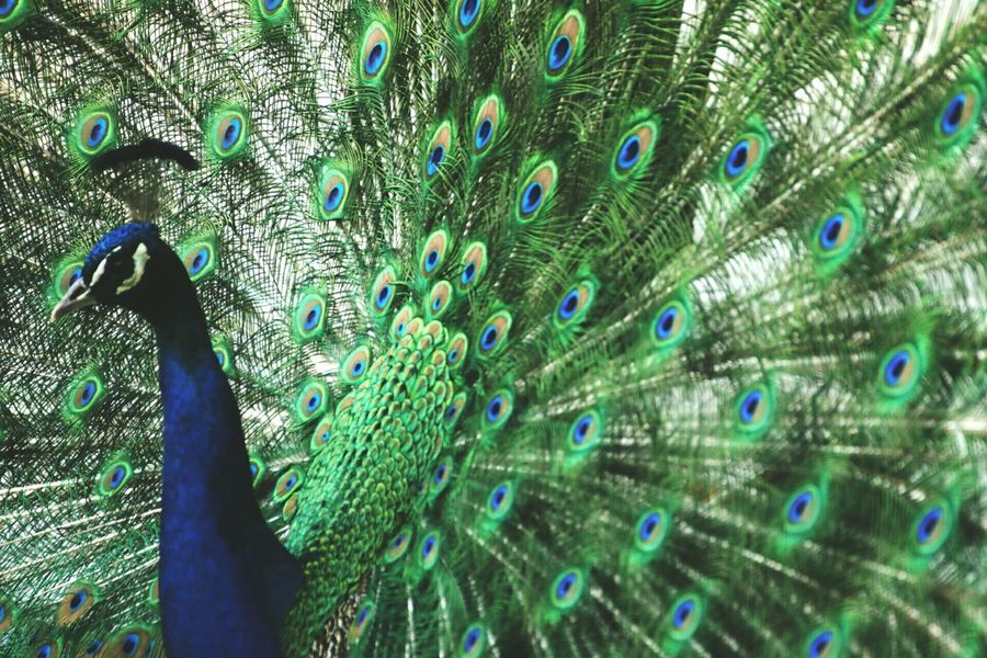 Animals Animal_collection Naturelovers Nature_collection EyeEmbestshots EyeEm Best Shots Eye4photography  EyeEm Nature Lover Animal Photography Birds