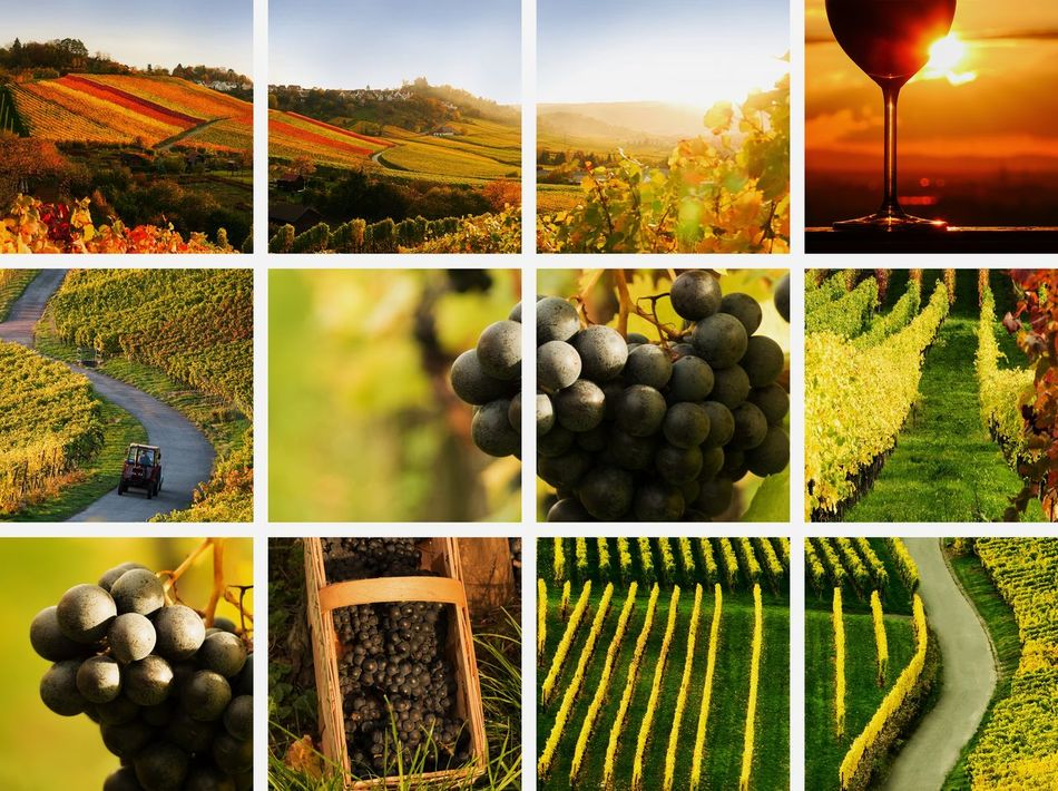 wine collage Autumn Backgrounds Collage Colorful Drinks EyeEm Gallery Field Grapes Landscape Landscapes With WhiteWall Montage Montage Photography Nature No People Outdoor Pictures Photo Montage Riesling Sepia Summer Vineyard Vintage Wine Wine Farm Wineglass Winery