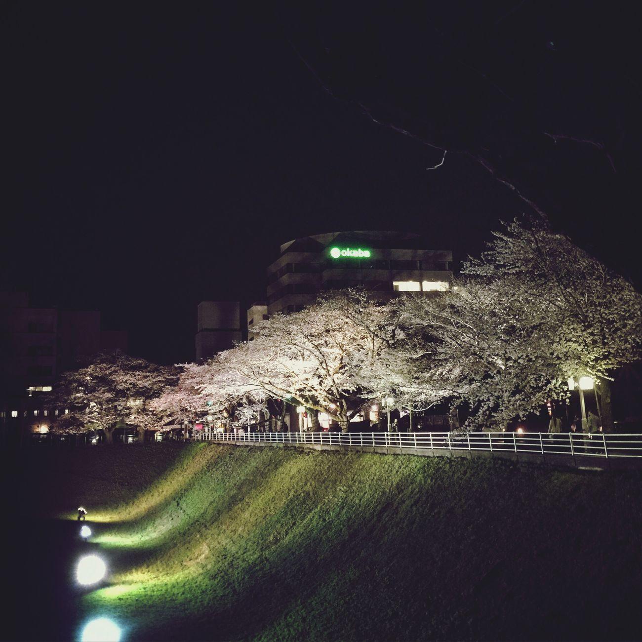 ♪さくらさくら 弥生の空に サクラ 桜 😚 夜桜お七 Cherryblossom 夜桜 日本の桜 日本の心 Sakura