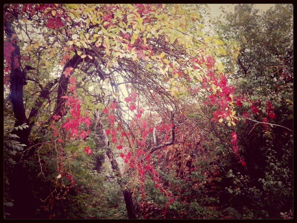 Autumn Colors Of Autumn Autumn Trees Hugging A Tree