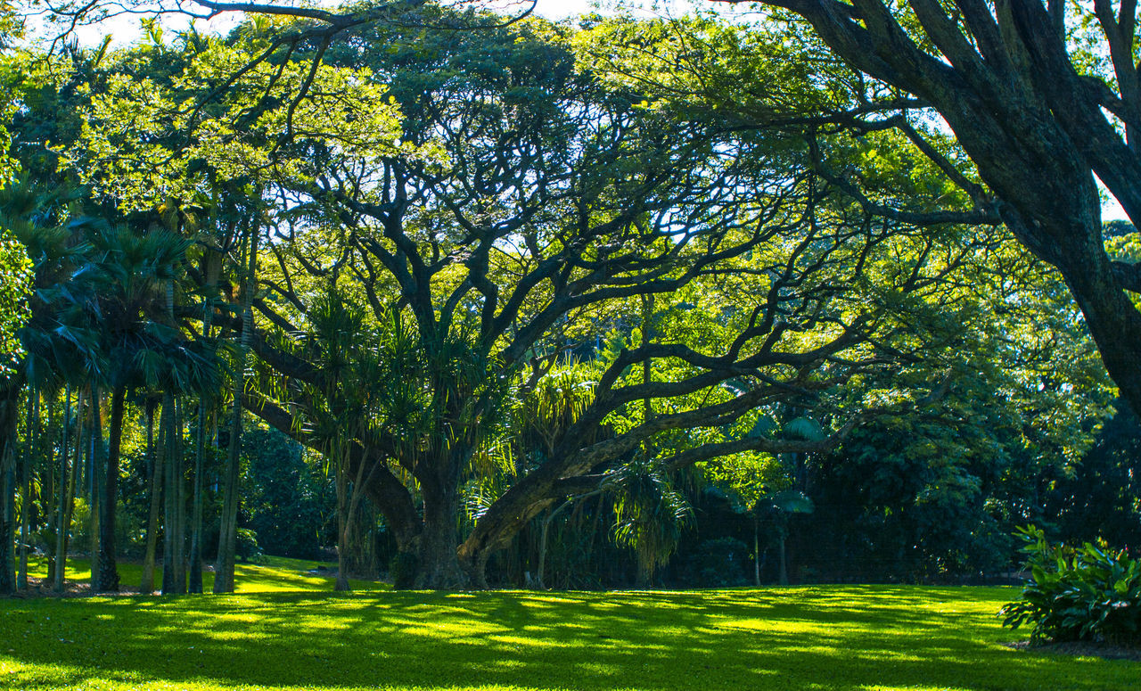 A magical forest Beauty In Nature Branch Day Enjoying Life Field Forest Photography Garden Grass Grass Area Grassy Green Color Growth Lush Foliage Nature Outdoors Park Remote Scenics Solitude Taking Photos Tourism Tranquil Scene Tranquility Tree Tree Trunk