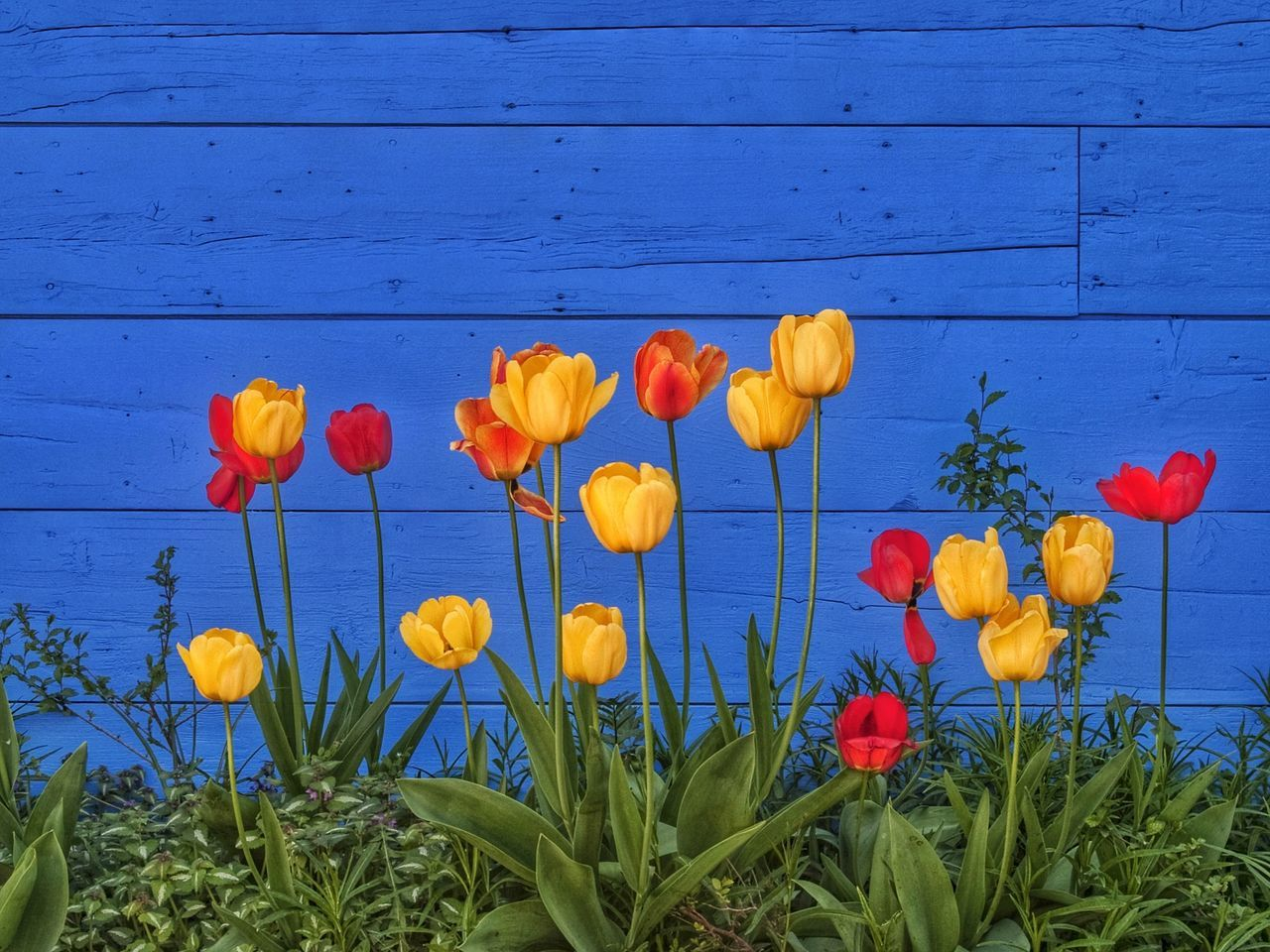Beautiful stock photos of spring, Beauty In Nature, Blooming, Blue, Day